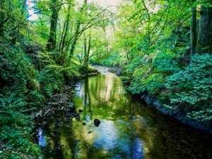 une rivière sous les bois en Auvergne